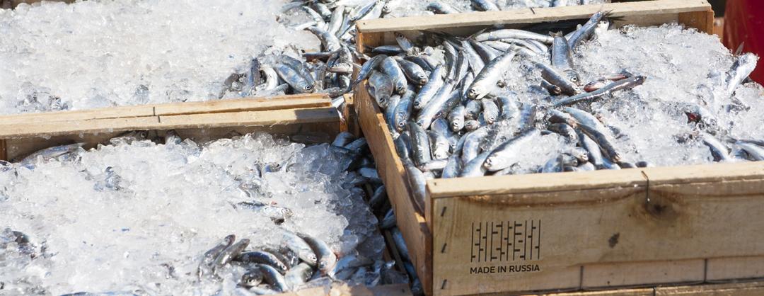 Рыбный порт построят в Дагестане