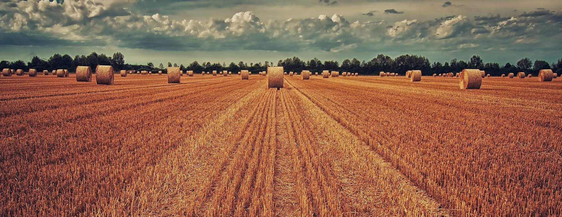 L'azienda Smolensk esporta macchinari agricoli in Polonia