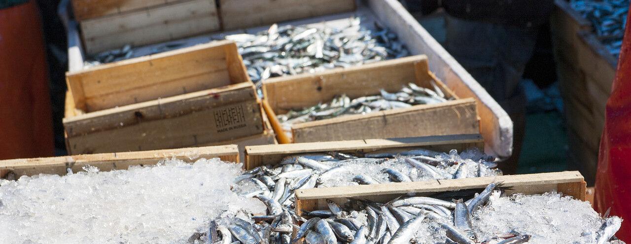 На Дальнем Востоке открыли новый завод по переработке рыбы