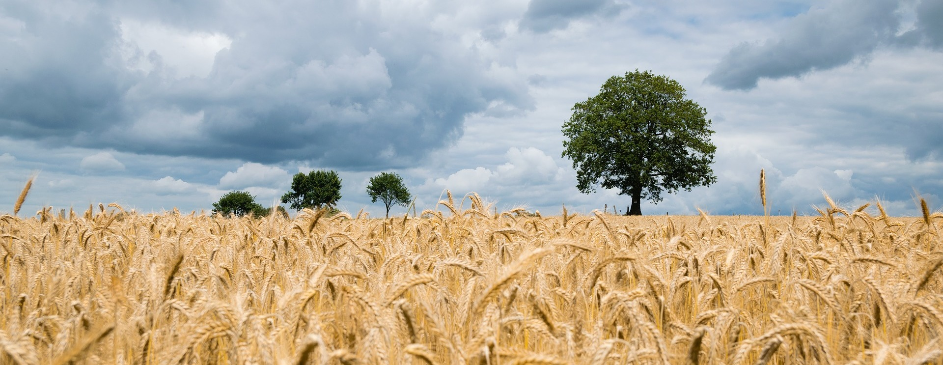 Russia exports 39% more barley in 2020