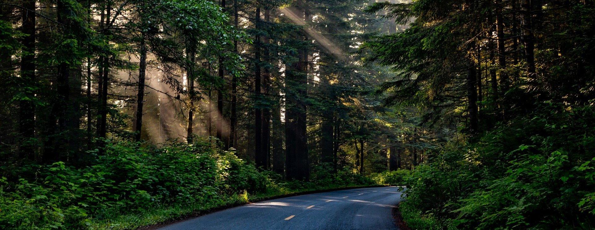 Une carte numérique des forêts pour les investisseurs a été créée en Transbaikalie