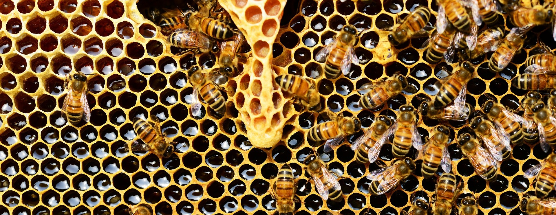State Duma approves law on beekeeping